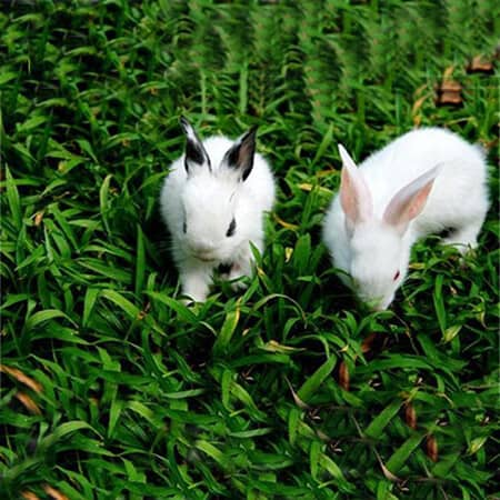 Rabbit breeding and management